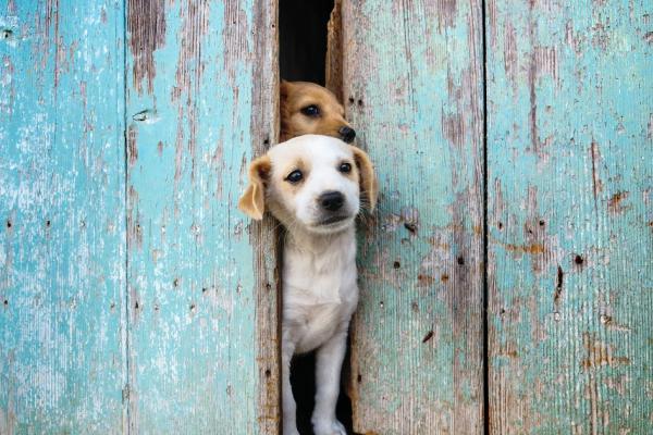 Ciúme canino: como fazer para evitar esse sentimento nos pets?