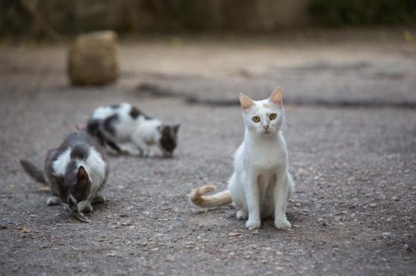 Como ajudar gatos de rua?